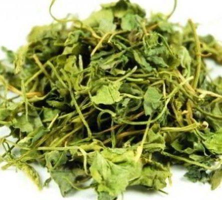 Шамбала листья